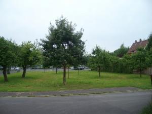 12 Bäume stehen auf der Wiese