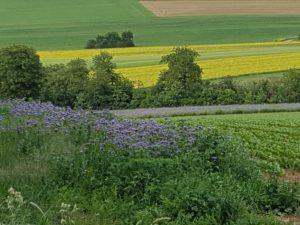 Blühende Streifen in Hettstadt